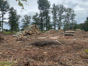Leersum snakt naar nieuwe bomen: burgemeester doet video-oproep
